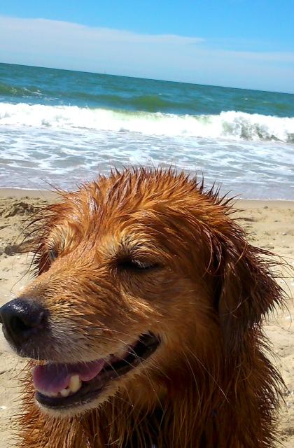Leestekenhond